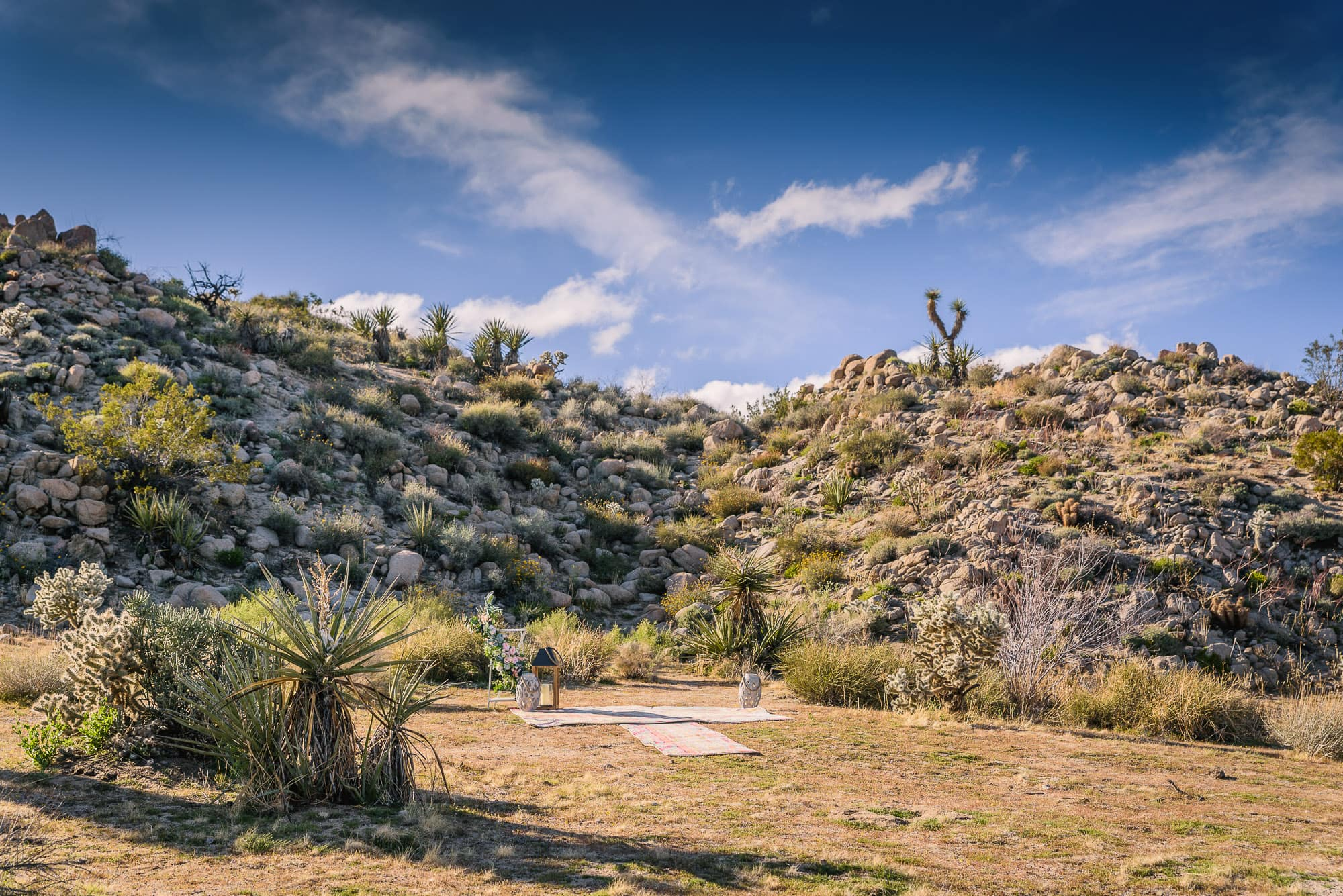 002_Alan_and_Heidi_Joshua_Tree_Spring_Elopement